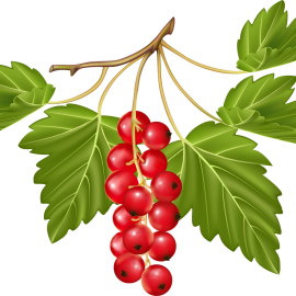 Ягоды, плоды, побеги
