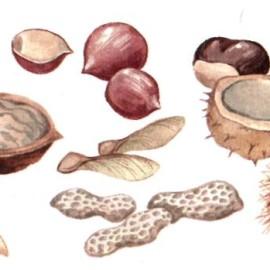 Орехи, семена, шишки