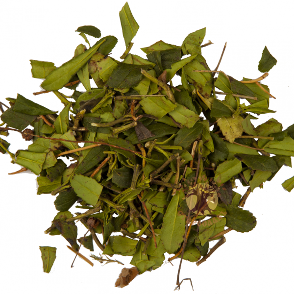 трава зимолюбка для похудения цена